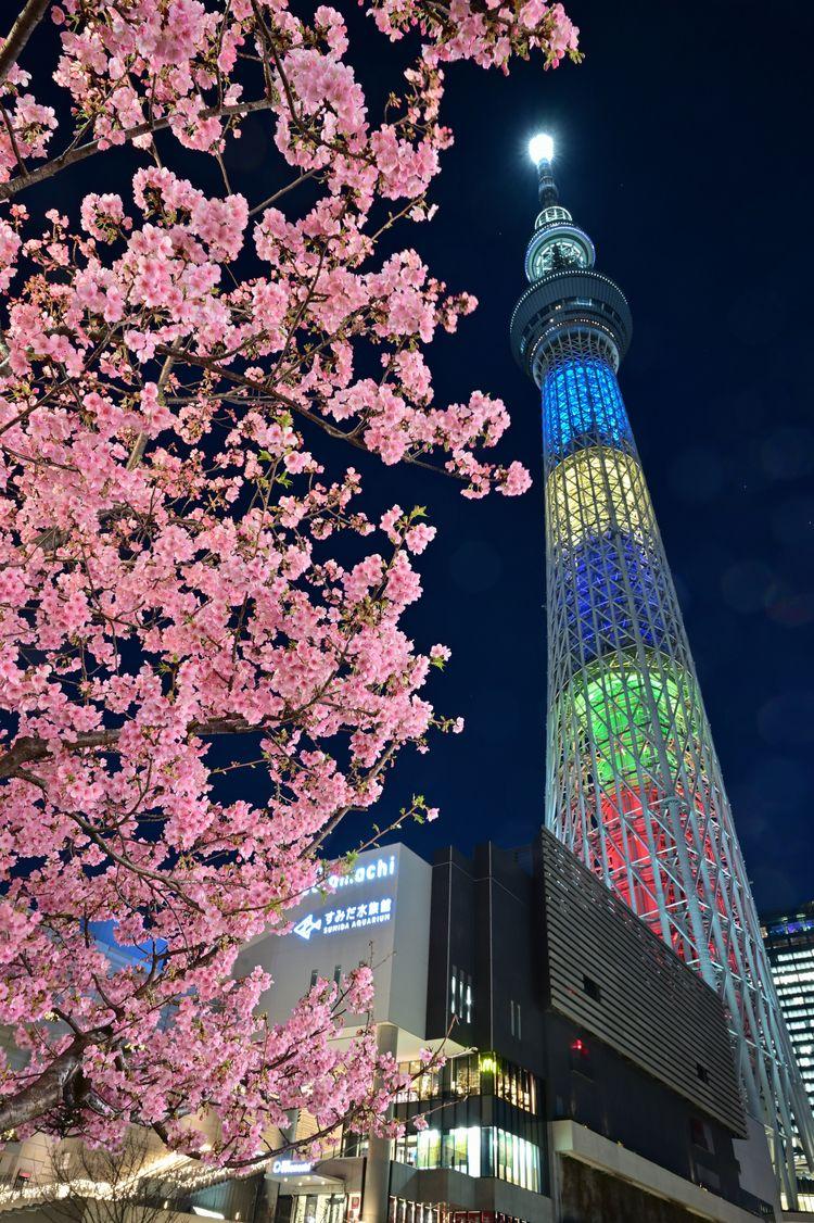 Tokyo Skytree Kawazu-zakura Tob - yoshirou   ello
