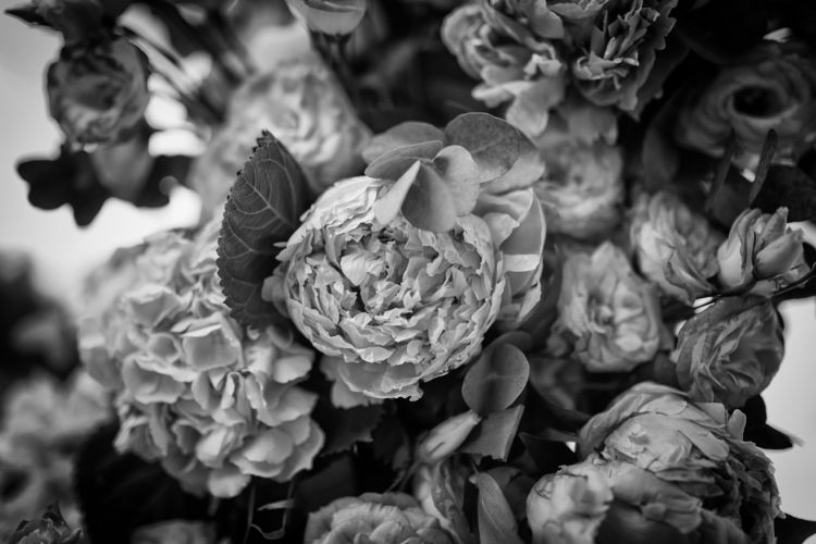 Dark Blossom - Photography, Flowers - anna_izzo | ello