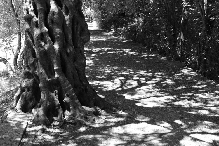 tree, road, roots - karineduval | ello