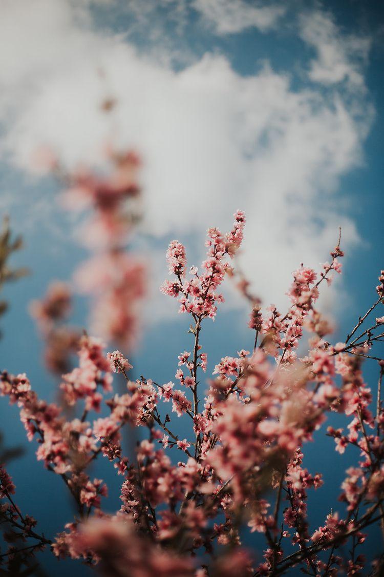 ·Breathe· tree photography phot - thepieholephotography | ello