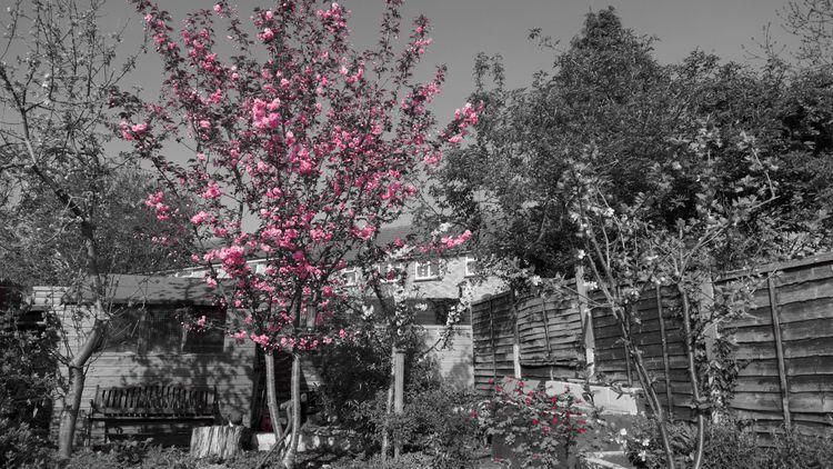spring, selectivecolour, blossom - mattoutdoors   ello