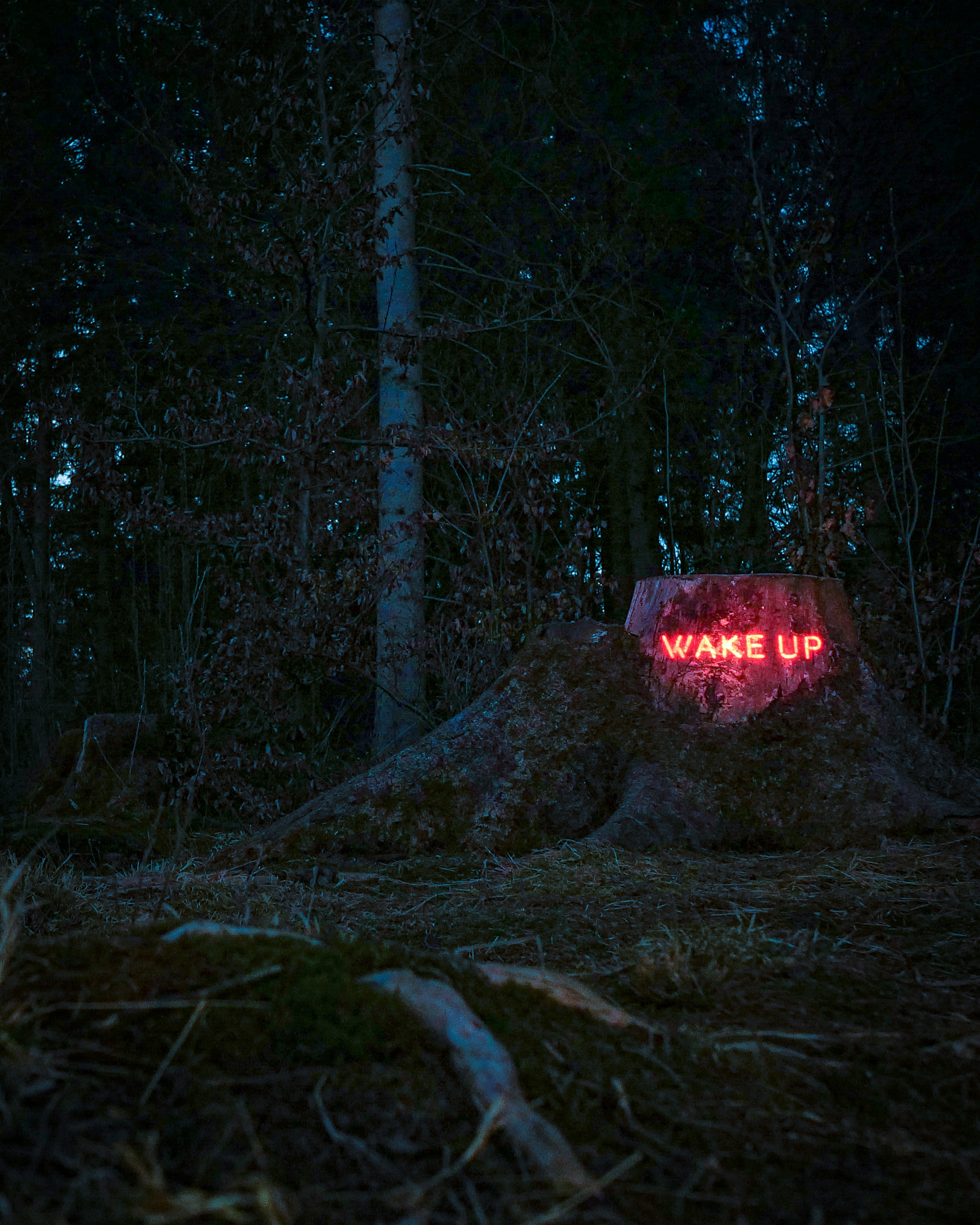 Message forest: WAKE Projection - philipp_frank | ello