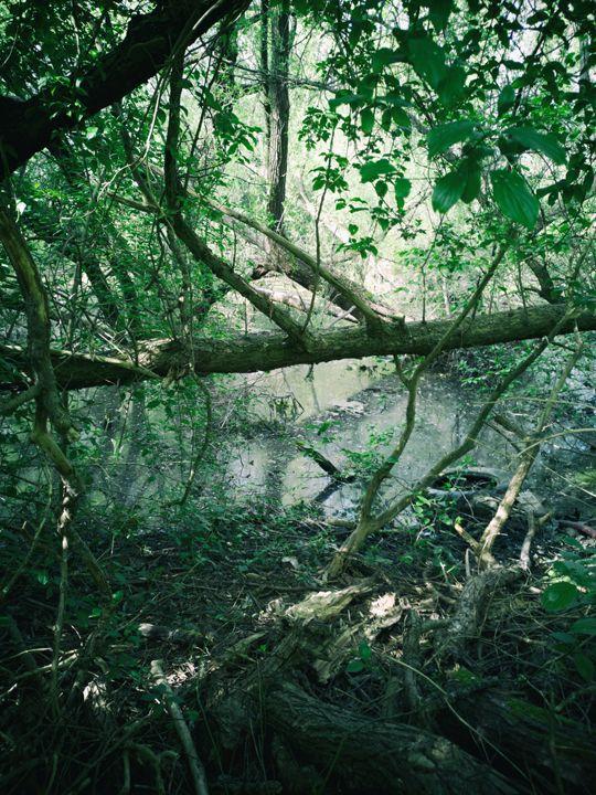 jungle 002 - studio_zamenhof | ello