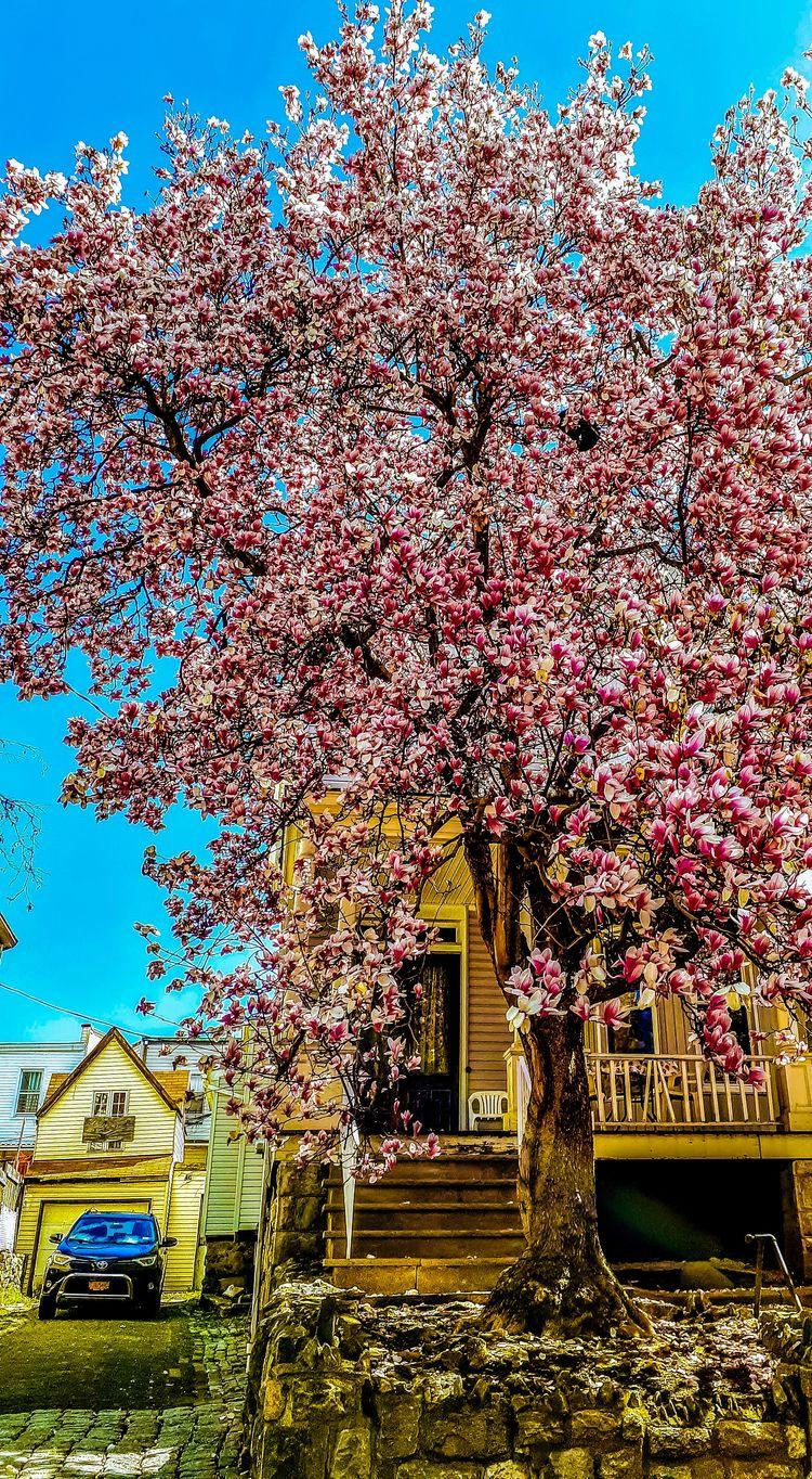 spring fling blooming Bronx, NY - banubianlife | ello