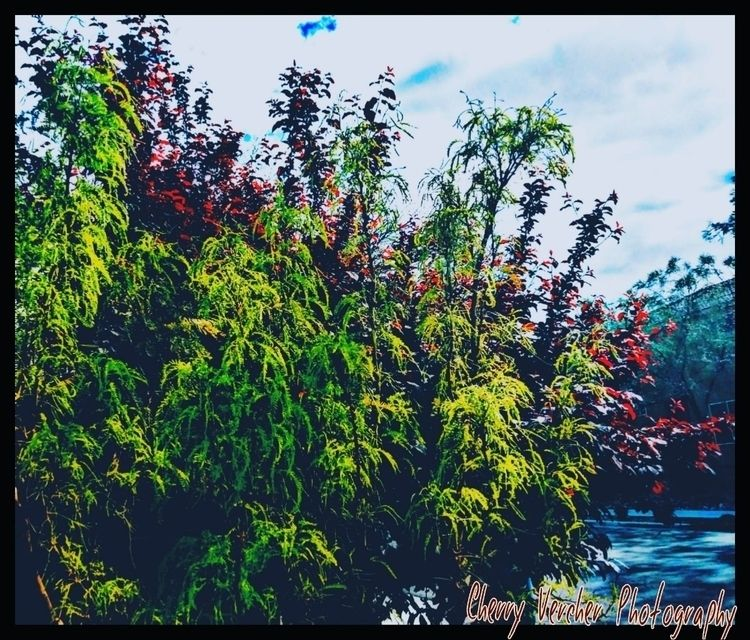 Landscape Photography - cherrysag25   ello