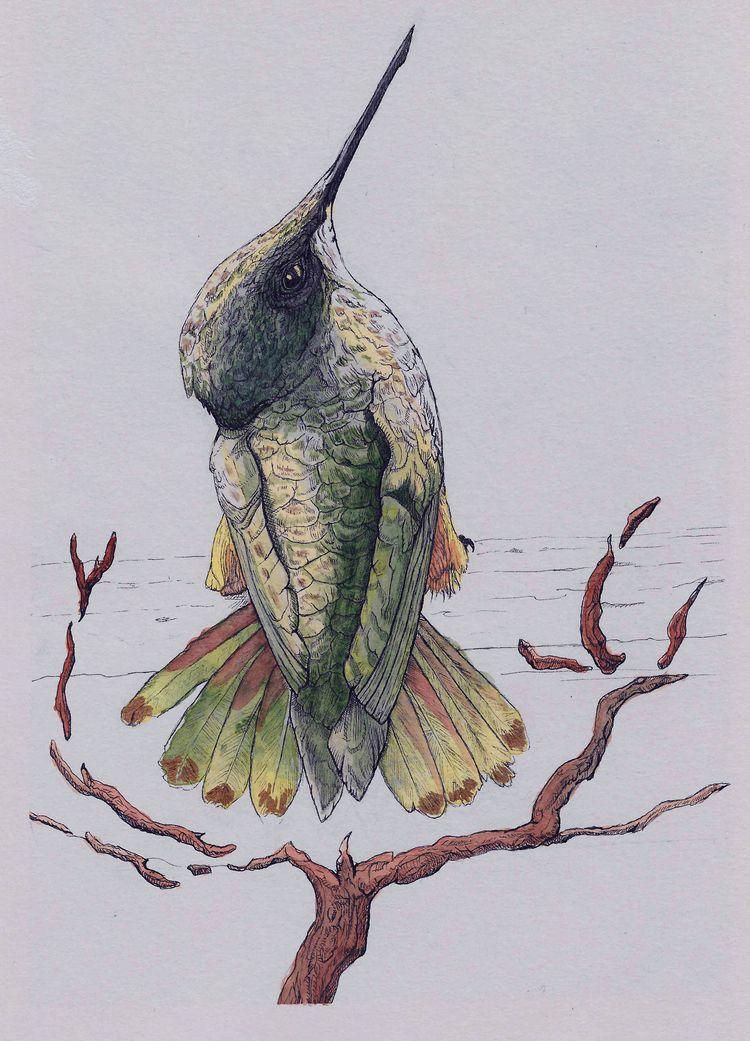 Colibri Mixed media (watercolor - nicglorieux_illustration | ello