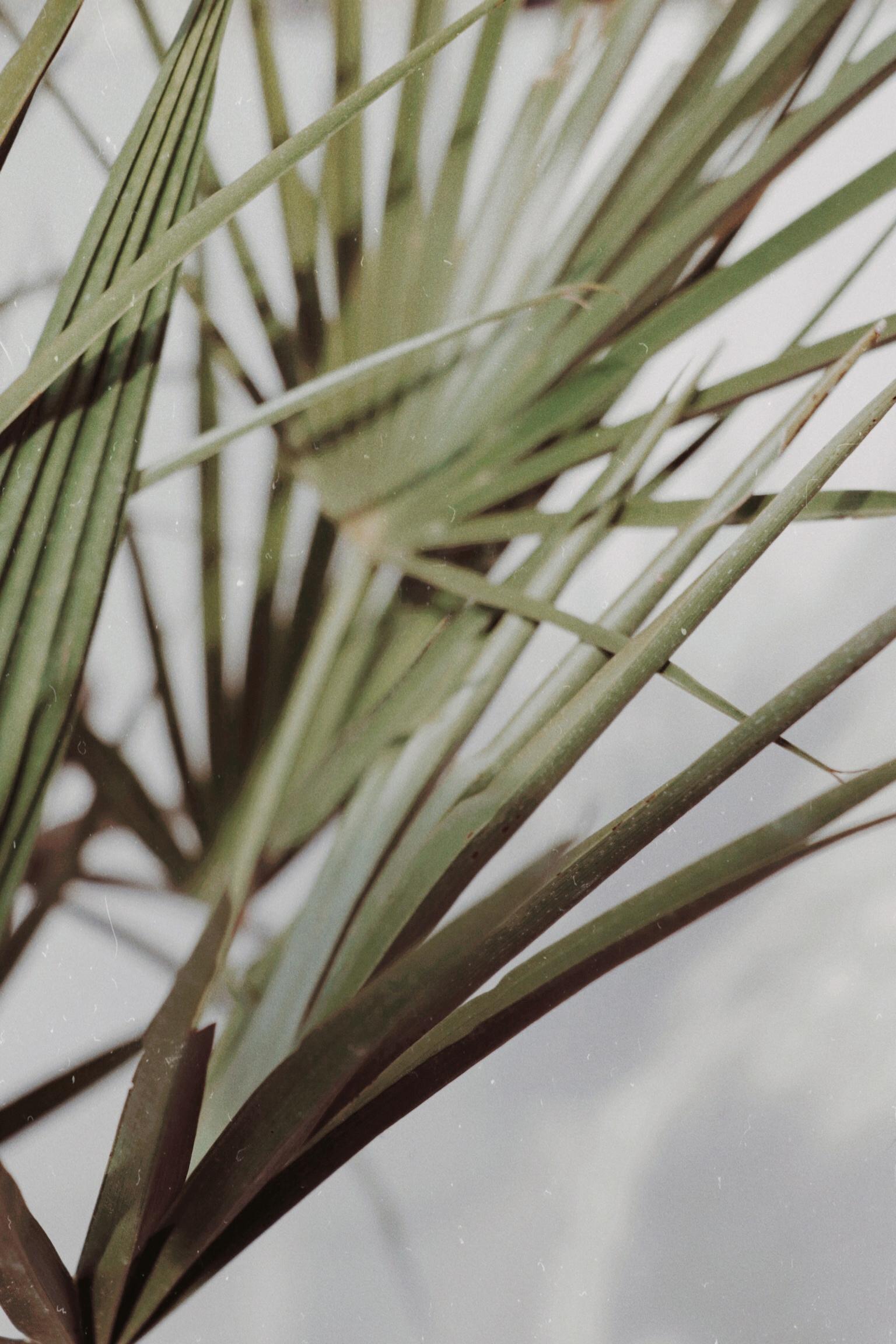 Tropical vintage Instagram - palm - agzed   ello