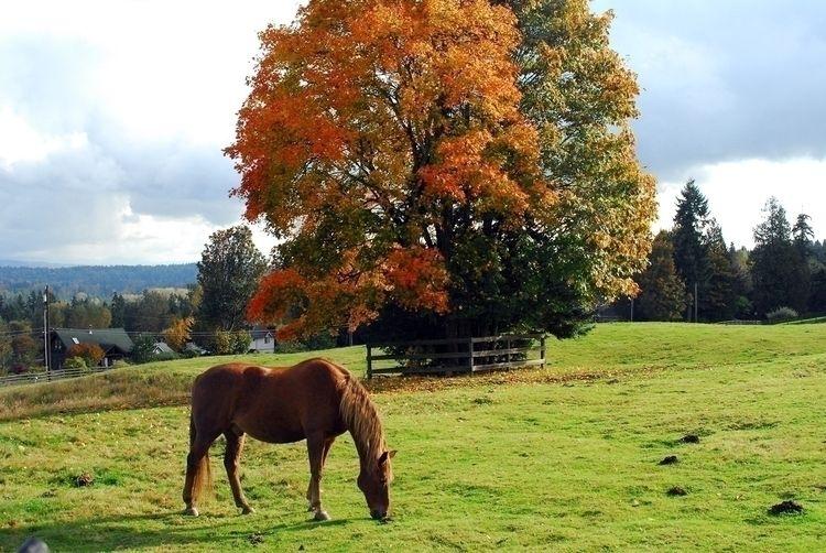 video - horses, pasture, fall, bettertimes - peltagames | ello