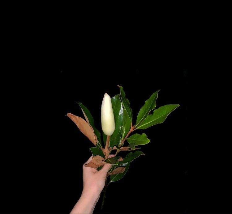 Magnolia bloom. Sydney 🤍 - hypermaria | ello