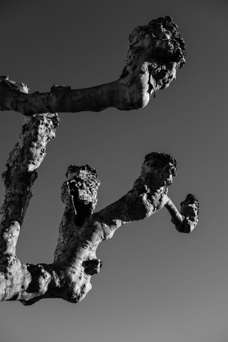 tree faces - ilirtahiri | ello