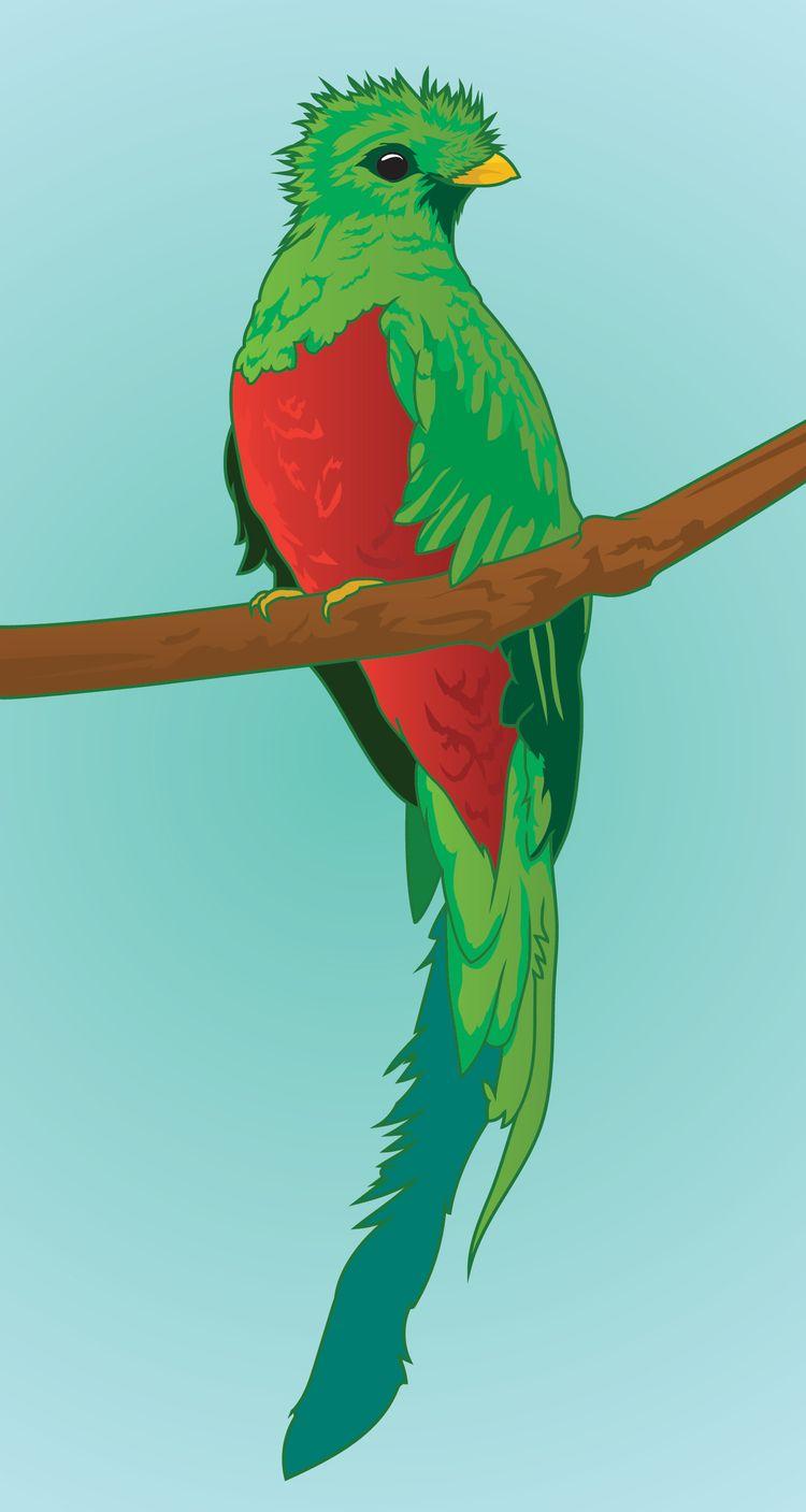 Quetzal - quetzal, illustration - mattadesigns | ello