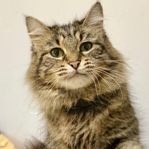 Ethel! 14 Years 3 sponsored Naz - snapcats | ello