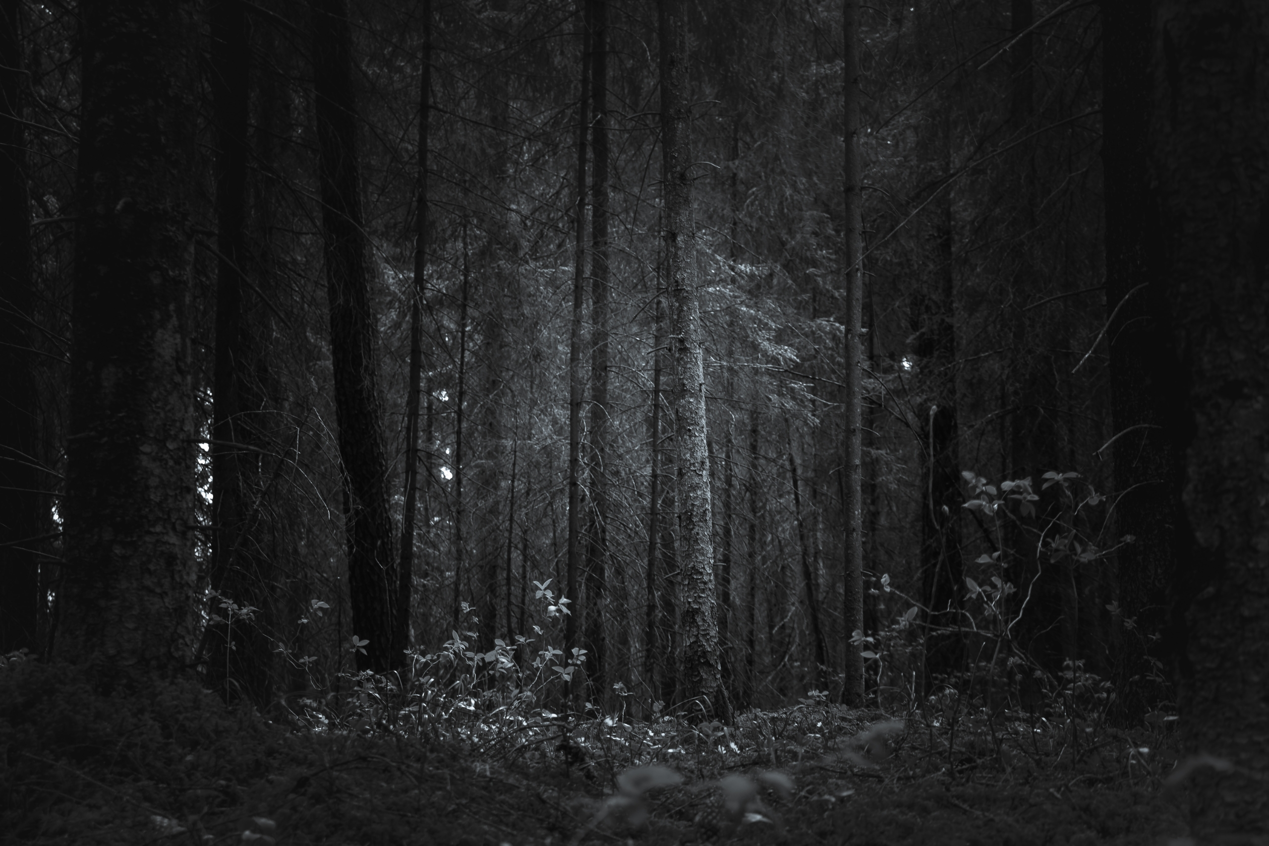 lithuania, lietuva, лес, forest - beheroght | ello