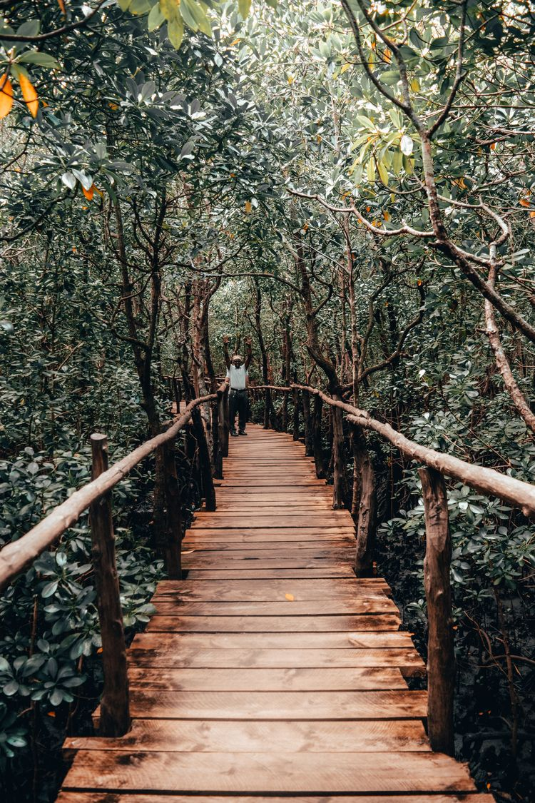 Jozani Forest Zanzibar growing  - petrovalex | ello