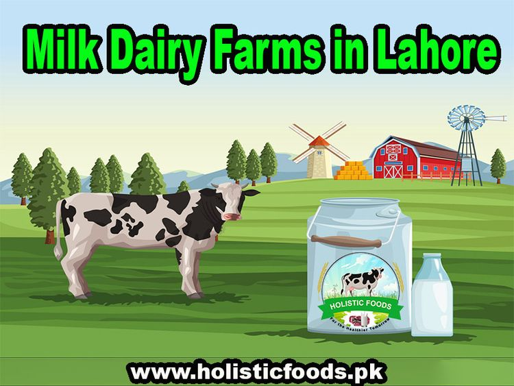 milk dairy farms Lahore? stop s - holisticfoods19 | ello