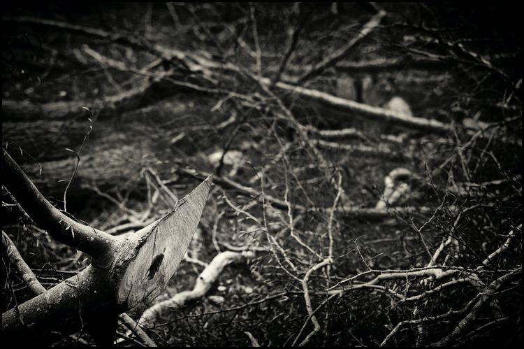 Listening Trees Steen Selvejer - sselvejer   ello