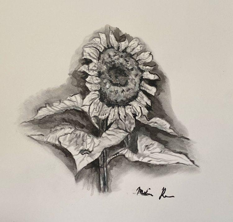 Sunflower- Melissa Romeo Nature - melissa-m-romeo | ello