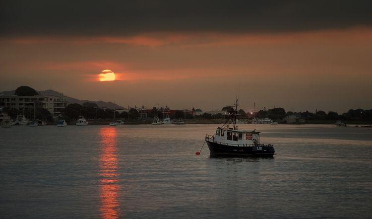Fish Chips Sea Sunset Whakatane - peter_kurdulija   ello