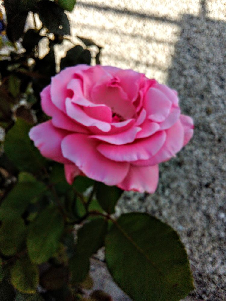 flower, natur, 2020 - lucasphoto | ello
