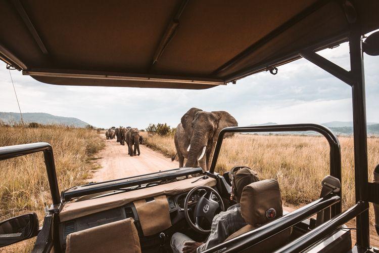African Safari - olivierjames808 | ello