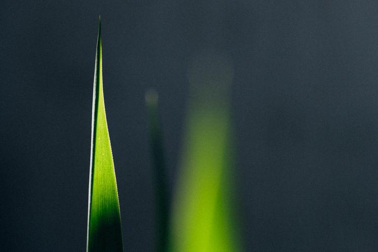 plant, minimalist, photography - muntta | ello