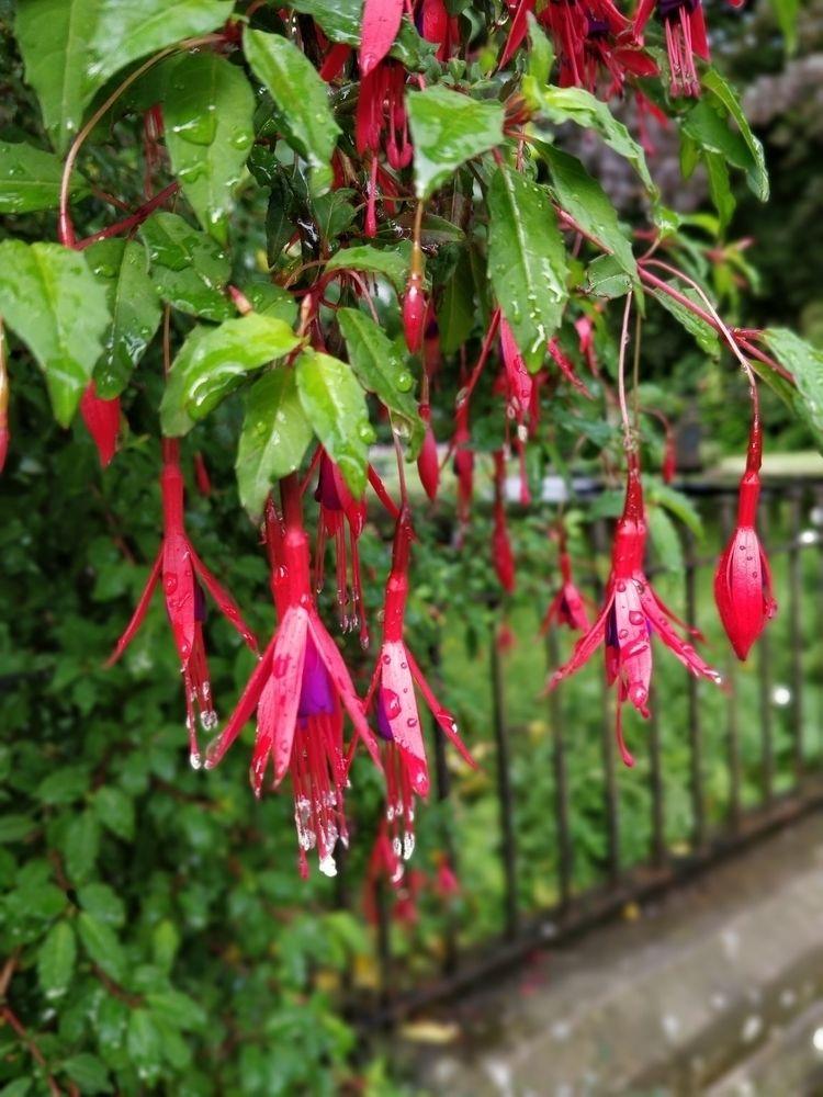 photography, rain, flowers, morning - tevere | ello
