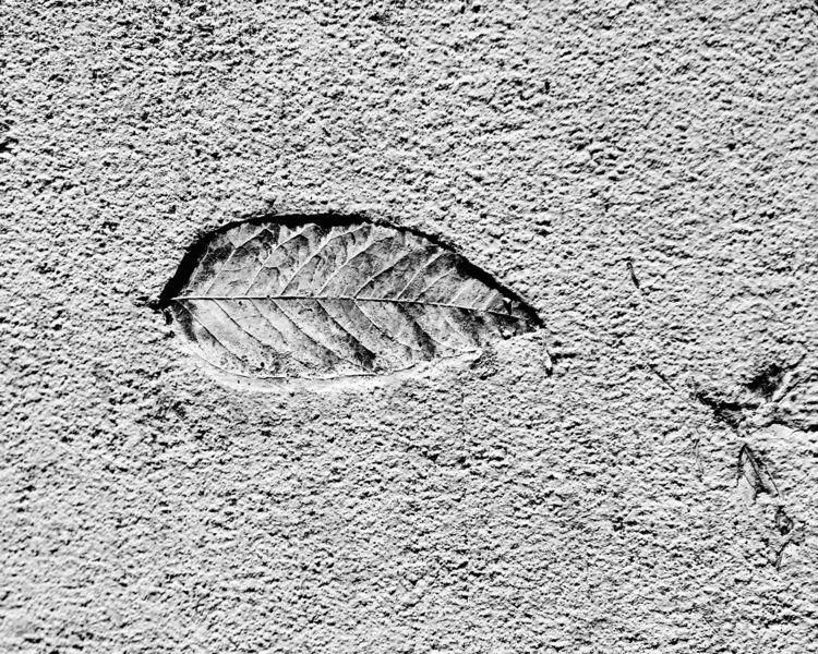 Fossil ello.co/junwin - photography - junwin | ello