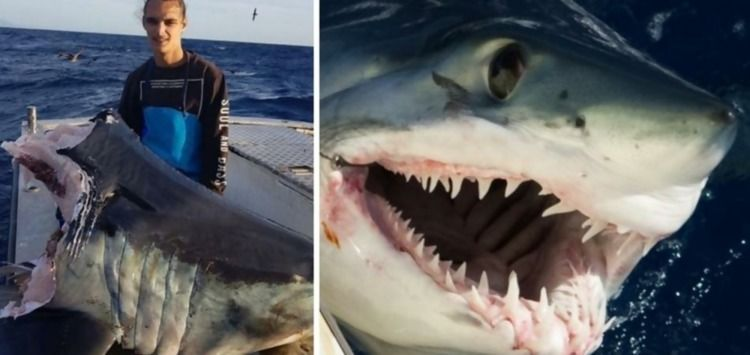 Fisherman Catches Huge Shark He - fishbuddydirectory | ello