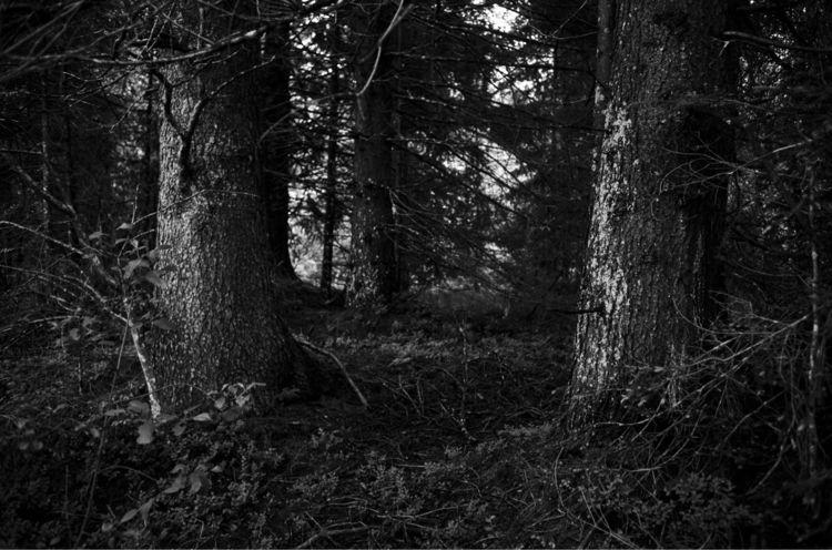 Pines. . Part series started, d - marcelgladbach | ello