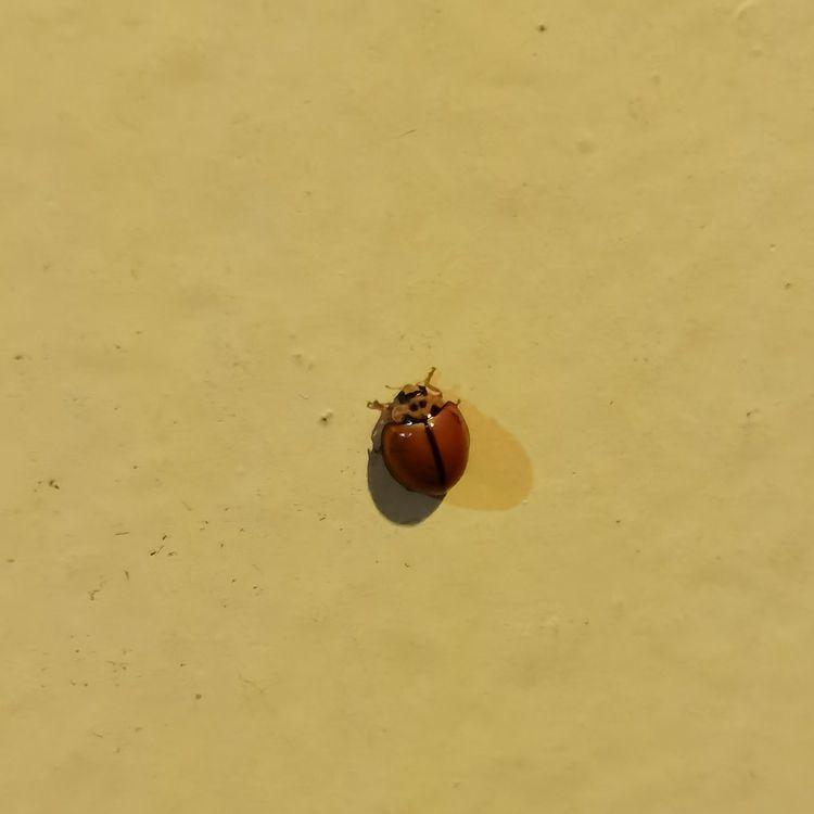 赤い球体:beetle - junjitominaga | ello
