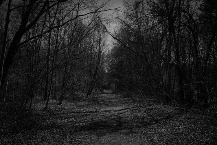 Walk - trees, darkphotography, nature - westlyn | ello