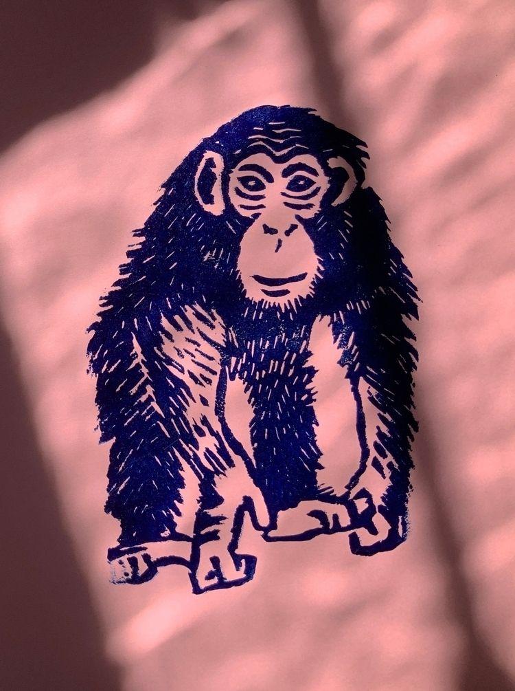 Chimpanzee Pan troglodytes - monkeyzine - marcribera | ello