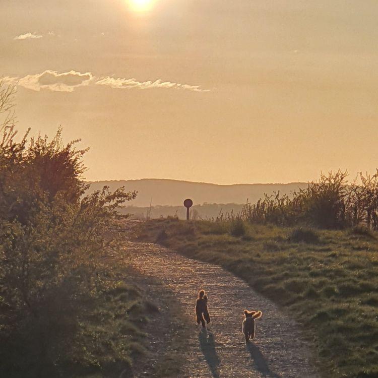 Evening walk - wickhamai   ello