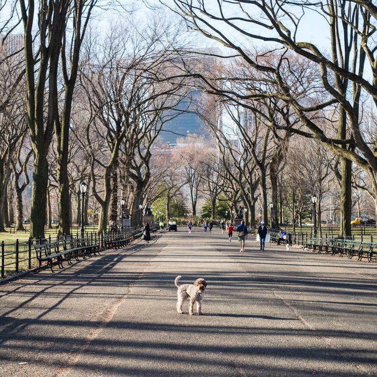 Central Park, NYC years - danielkrieger | ello