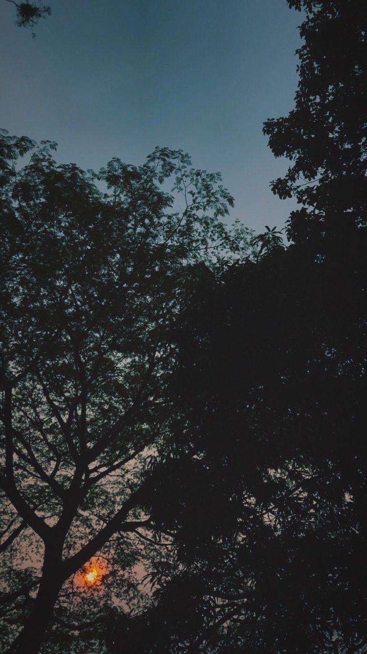 sunset - milpecas   ello