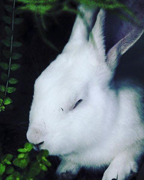 animal lovers, happen considere - cleliajanephotography | ello