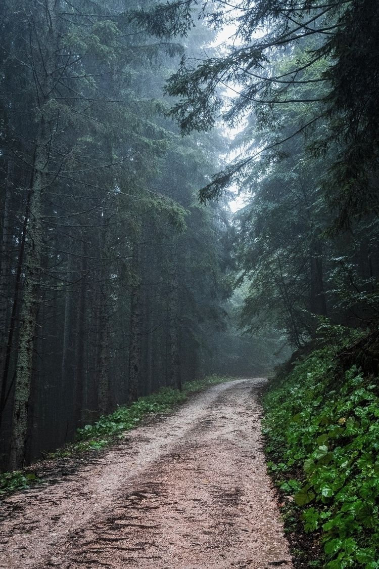 misty mountain lane. Pokljuka,  - notgavin | ello
