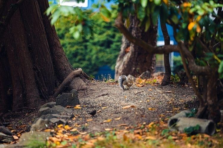 fall, squirrel, eosr6 - dephiros   ello