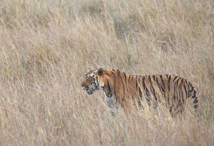 Searching Wildlife Tours India - indiatourspackages