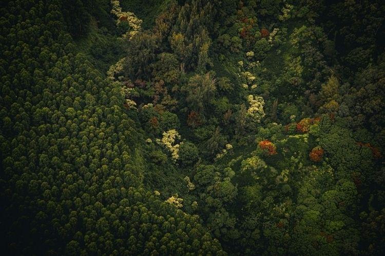 Cool forest...  - asia, ello, elloasia - fokality | ello