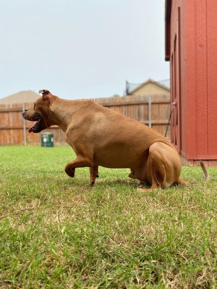 2 year 3 pawed dog Zeus - nibua69   ello