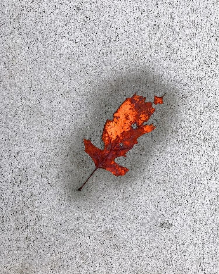Leaf - photography - kenlong | ello