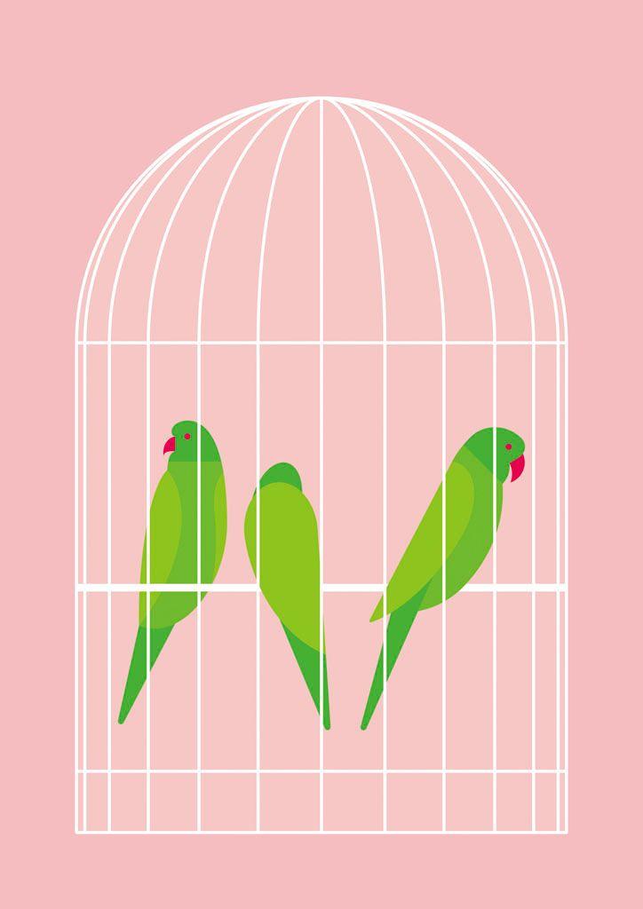 Cage - parakeet - anotherangles   ello