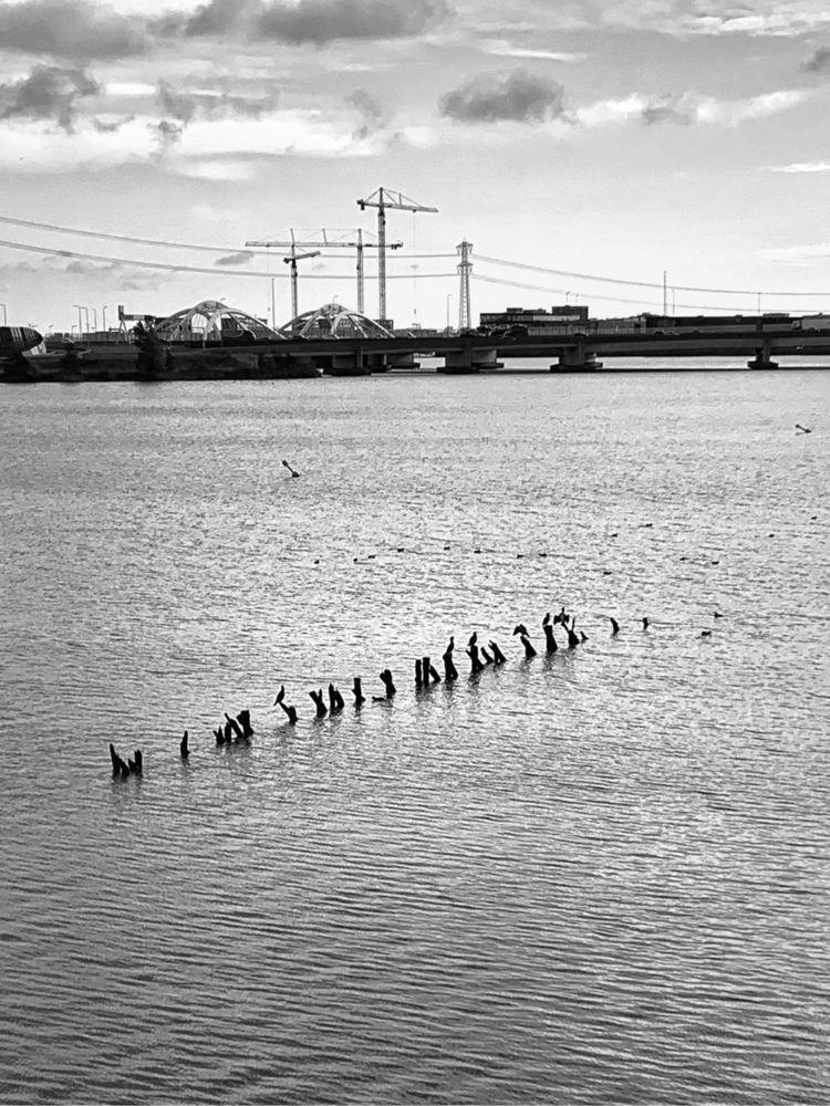 urban paradise - asch-nl-amsterdam   ello
