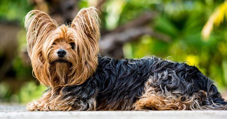 Introduction; Cute small dog br - leroyaurelien2000 | ello