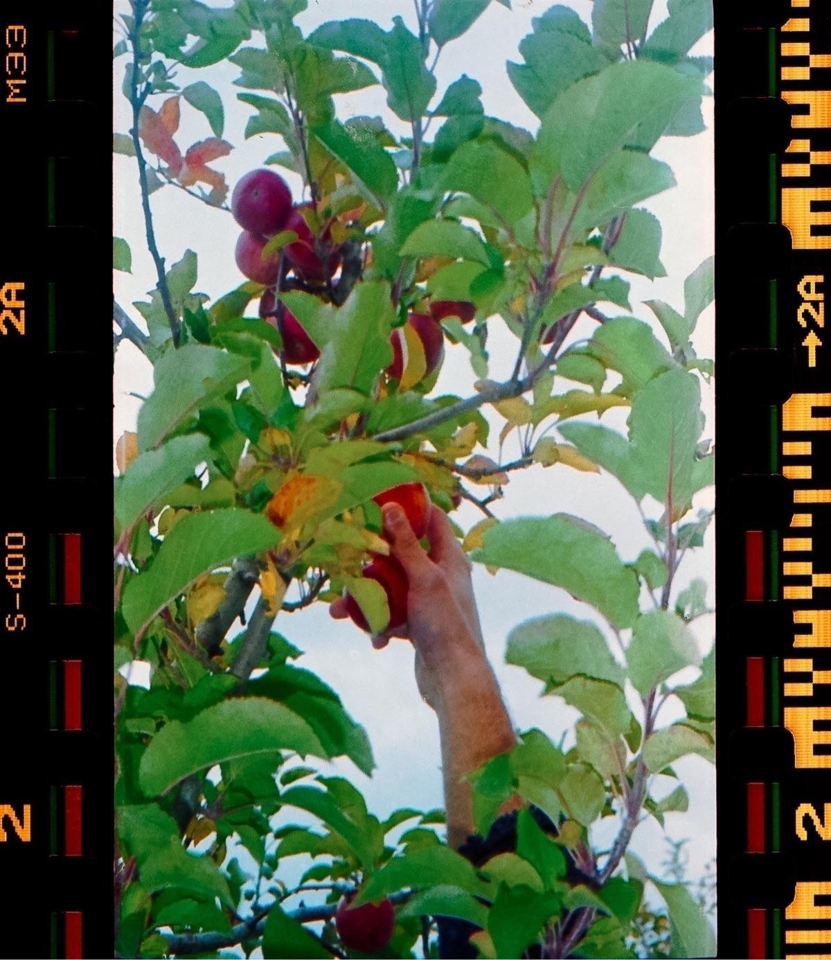 Gardens - 35mm, fujisuperia400 - icvrus | ello