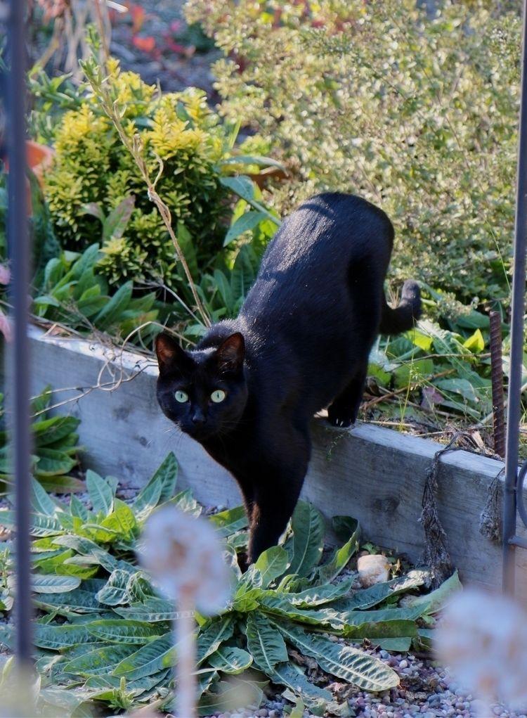 Spider Kitty :heart:️ - farmerm | ello