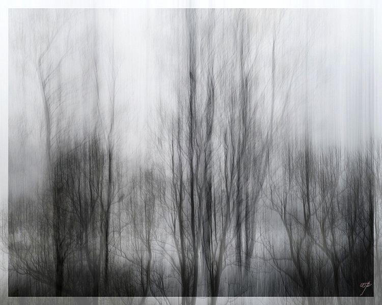 icm landscape / intentional cam - voiceofsf | ello