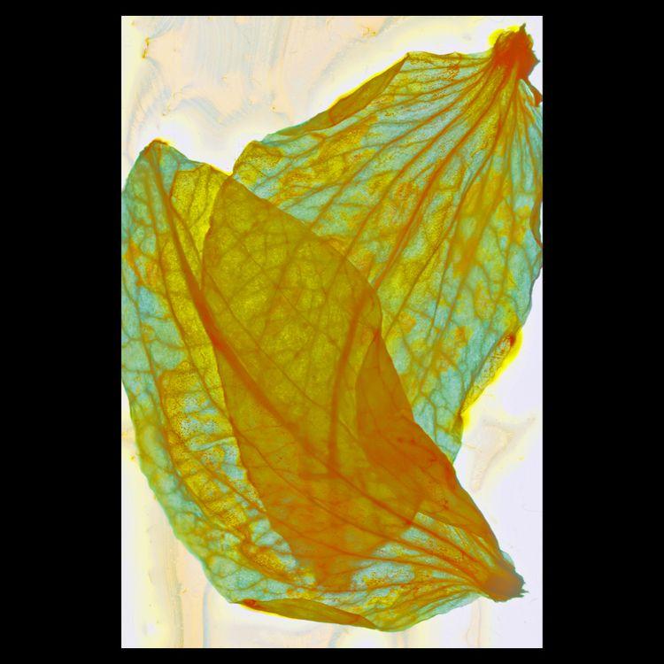 Flora 110715 . piece, mixed med - matthewschiavello   ello
