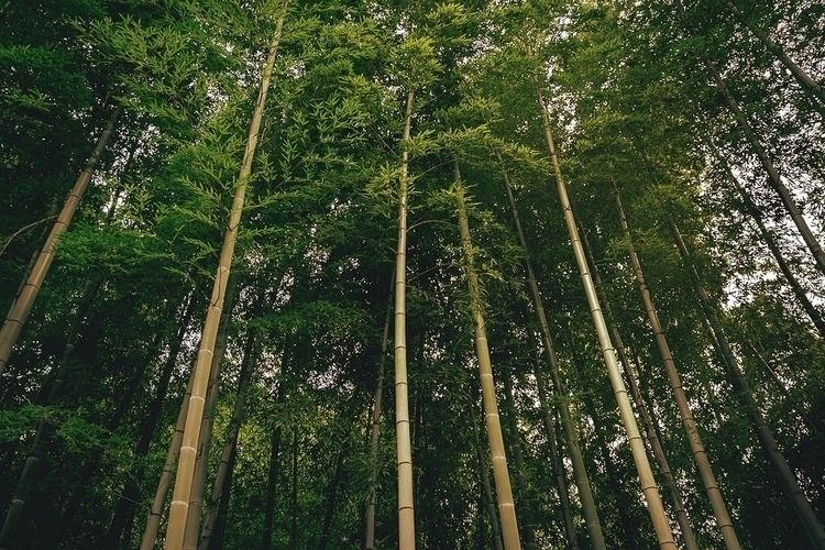 Bamboo forest favorite types - tokyo - fokality | ello